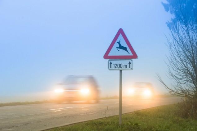 Warnung vor Wildwechsel