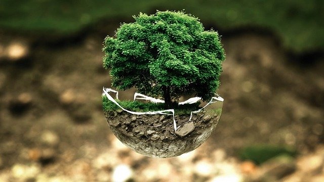 Baum in einer zerbrochenen Weltkugel