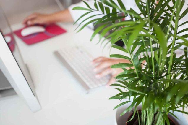 Pflanze auf dem Schreibtisch