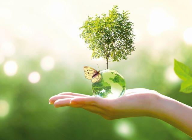 Baum und Schmetterling auf einer Hand