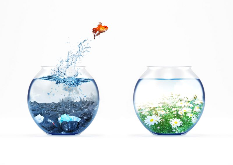 Goldfisch springt von einem öden Aquarium in ein schönes Aquarium