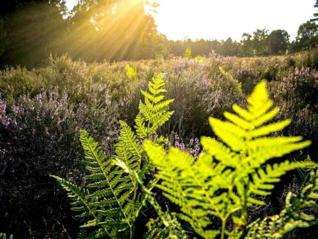 Blumenwiese und Wald